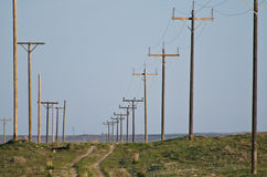 Utility Poles Standing in the Desert Stock Image