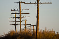 Utility Poles Standing in the Desert Stock Photo
