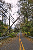 Utility Power Line And Pole Toppled By Fallen Tree Stock Images