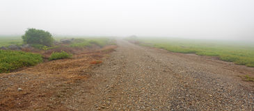 Utility road between blueberry fields in dense fog Royalty Free Stock Photos