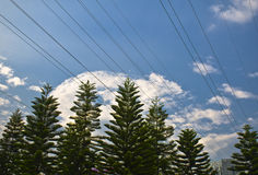 Utility wires over the trees. Utility wires over the trees with blue sky background Royalty Free Stock Photography
