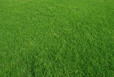 Utilizzazione del terreno di erba verde come fondo della natura Immagine Stock