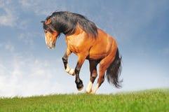 utkastet frigör hästen Arkivfoton