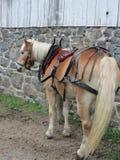 Utkasthäst som är klar att dra Arkivbild