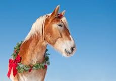 Utkasthäst som slitage en julkran Arkivbilder