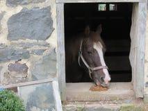Utkasthäst som ut ser ladugårdfönstret i Gettysburg Royaltyfri Fotografi