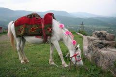 Utklädd häst Fotografering för Bildbyråer