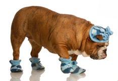 utklädd vinter för hund Royaltyfri Fotografi