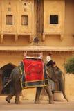 Utklädda elefanter i Jaipur arkivfoton