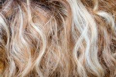 Utklipp av blont lockigt hår som en texturbakgrundssammansättning arkivfoto