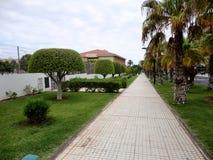 Utmärkt formade träd i Costa Adeje, Tenerife, kanariefågelöar, Spanien Royaltyfri Bild