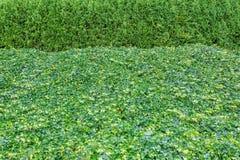 Utmärkt klippte buskar Royaltyfri Fotografi
