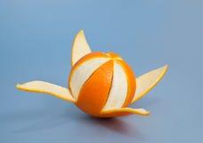Utmärkt skalad apelsin Arkivbild