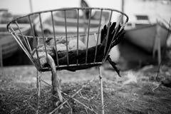 Utmattat chiken Royaltyfri Bild
