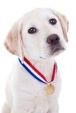 Utmärkelsevinnarehund Arkivfoto