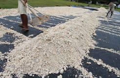 Utnyttjande av tapiokaavfalls arkivbilder