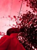 utomhus- Royaltyfri Fotografi