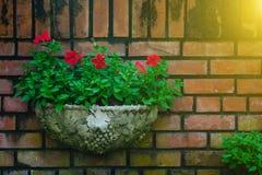 Utomhus- blomkruka som hänger i liten trädgård och under sommar Arkivbild