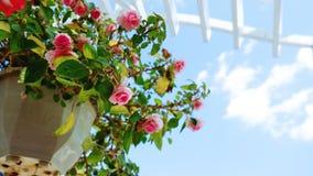 Utomhus- blomkruka som hänger på bakgrunden för blå himmel royaltyfria foton