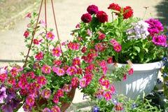 Utomhus- blommor i blomkruka arkivbild