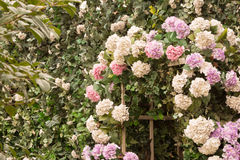Utomhus- brölloporientering 11 Royaltyfri Bild