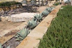 Utomhus- design för växtsäng arkivbild