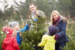 Utomhus- familj som tillsammans väljer julgranen Royaltyfria Bilder