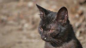 Utomhus- gammalt sjukt rinnande husdjur för katt för rinnande näsa för snor hemlöst Arkivfoto