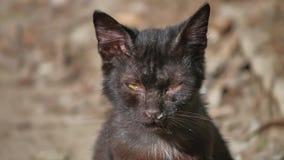 Utomhus- gammalt sjukt rinnande husdjur för katt för rinnande näsa för snor hemlöst Royaltyfri Fotografi