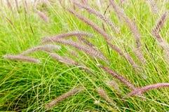 Utomhus- gräs för sommar Arkivfoton