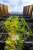 Utomhus- grön bosatt vägg, lodlinjeträdgård på modern kontorsbyggnad fotografering för bildbyråer