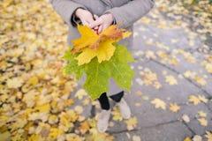 Utomhus- gula, röda och gröna höstsidor i händerna av en flicka arkivbild