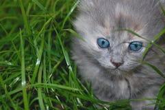utomhus- gullig kattunge Royaltyfri Foto
