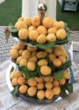 Utomhus- händelse för beröm med aprikors Royaltyfri Foto