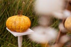 Utomhus halloween dekor Arkivbilder