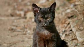 Utomhus- husdjur för gammal sjuk rinnande för snor katt för rinnande näsa hemlös Arkivbild
