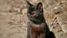 Utomhus- husdjur för gammal sjuk rinnande för snor katt för rinnande näsa hemlös Royaltyfria Foton