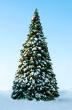 Utomhus- julgran Arkivbilder