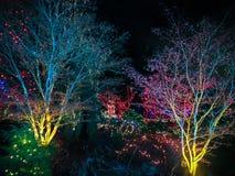 utomhus- jullampor royaltyfri fotografi