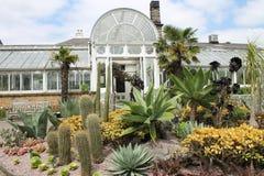 Utomhus- kakturs och suckulenter på botaniska trädgårdar Arkivbilder