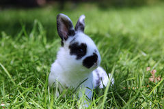 Utomhus- kanin Arkivfoton