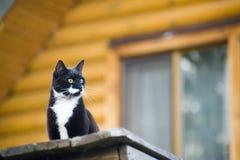 utomhus- katt Royaltyfri Fotografi