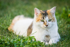 utomhus- katt Royaltyfria Bilder