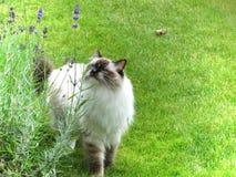 utomhus- katt Royaltyfri Foto