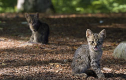 Utomhus- kattungar royaltyfri fotografi