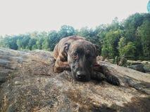 Utomhus- naturhund royaltyfria bilder
