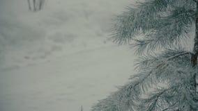 Utomhus- naturlig gran med snöig filialer i vintern lager videofilmer