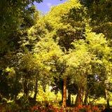Utomhus- naturträd Fotografering för Bildbyråer