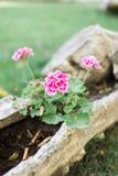 Utomhus- nya blommor för sommar eller för vår Arkivbild