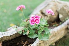 Utomhus- nya blommor för sommar eller för vår Arkivfoton